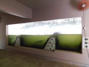 10-自然の水族館