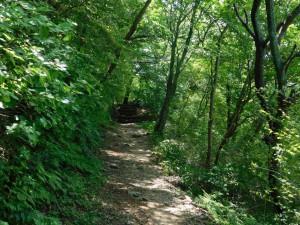 12-稜線の縦走路
