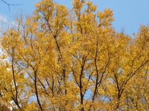 16-桜の園・黄葉