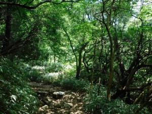 6-登山道