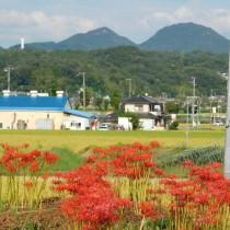 24-ヒガンバナと羽束山