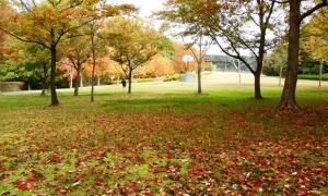 深田公園(6)