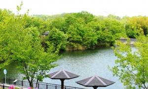 藤屋池(2)