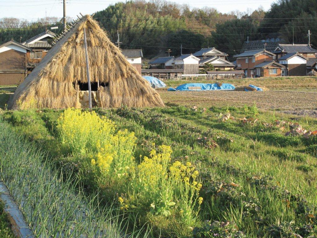 春のうど小屋