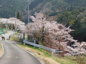 化石発見地・桜