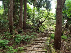 10-千本杉