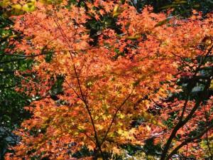 17-桜の園・紅葉