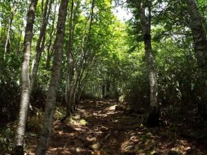 8-登山道