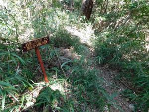 20-岩倉山反射板への分岐