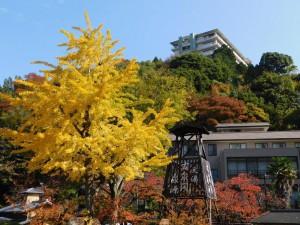 1-太閤橋のイチョウ