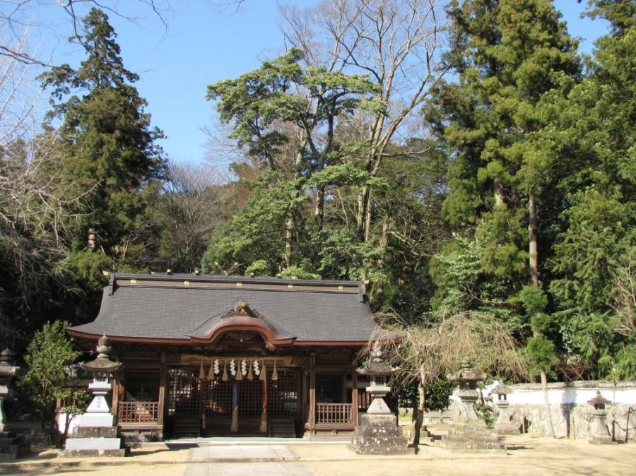 20-兵主神社とオガタマの巨木